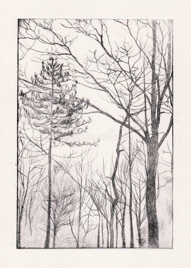 akwaforty drzewo ilustracja wektor