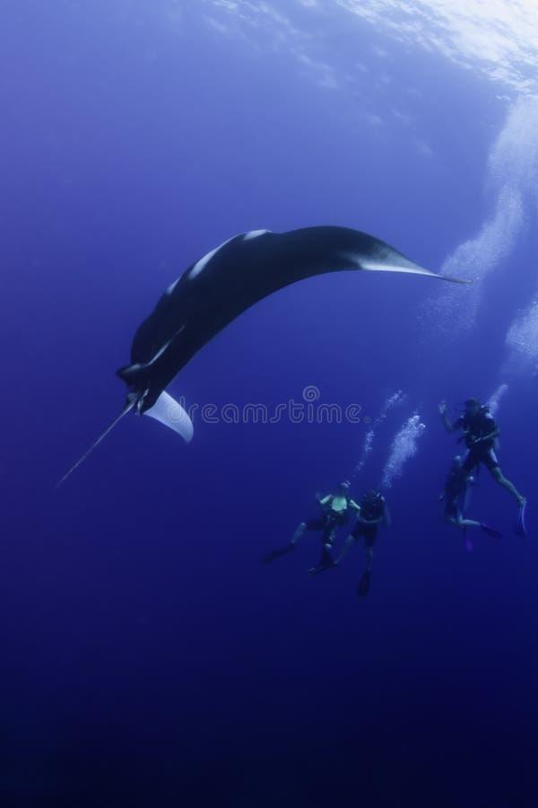 Akwalungów nurkowie patrzeje pływackie manty Ray zdjęcia royalty free