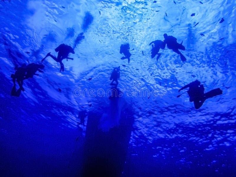 AKWALUNGÓW nurkowie Podwodni przy Zbawczą przerwą Pod statkiem zdjęcie stock
