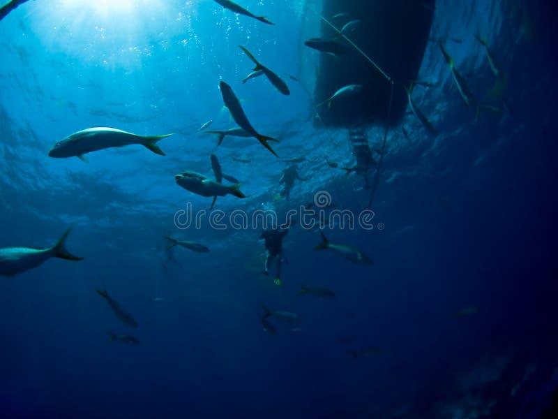 akwalungu łódkowaty nurkowy underwater fotografia royalty free