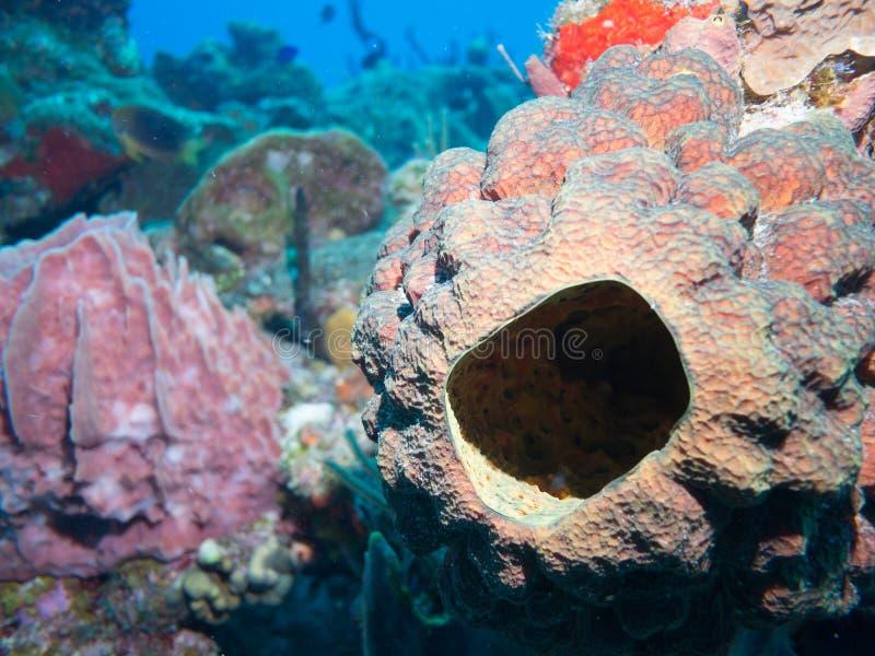 Akwalungu pikowanie na rafach koralowa w Meksyk fotografia stock