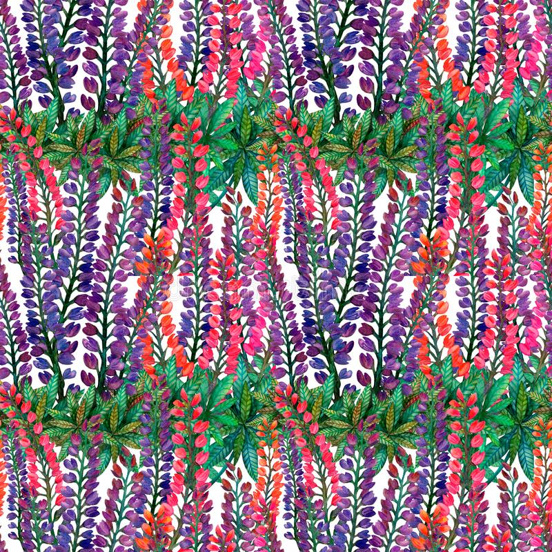 Akwarela łubiny Bezszwowy jaskrawy kolorowy lato kwiatu wzór na bielu ilustracji