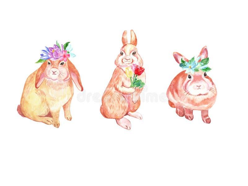 Akwarela śliczni Wielkanocni króliki ustawiający Dziecko króliki z wiosna kolorowymi kwiatami krokus, tulipany i śnieżyczki odizo royalty ilustracja