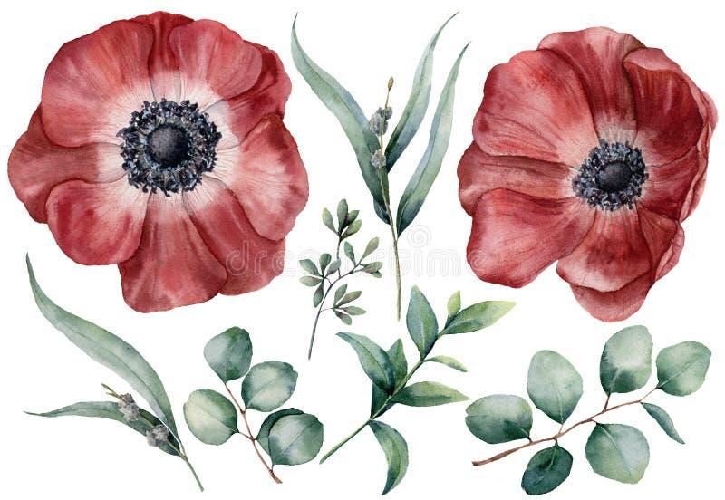 Akwarela anemon i eukaliptusowy duży set Wręcza malującą czerwoną anemonu, dziecka, siającego i srebnego dolara eukaliptusa gałąź royalty ilustracja