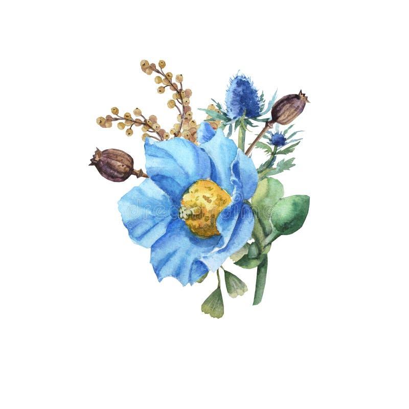 Akwarela błękitnego maczka kwiatu bukiet z liśćmi royalty ilustracja