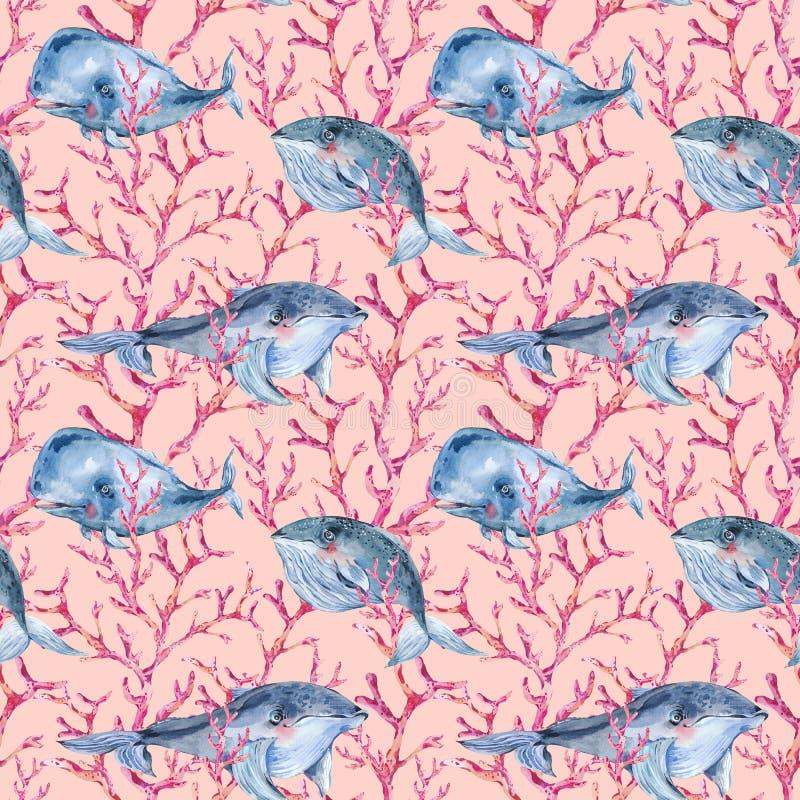 Akwarela błękitnego wieloryba bezszwowy wzór z czerwonym koralem, nautyczna tekstura, dennego zwierzęcia ilustracja na różowym tl royalty ilustracja