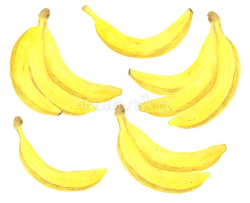Akwarela banana set Wręcza patroszoną świeżą zdrową dieting karmową ilustrację na białym tle dla pakunku projekta ilustracji