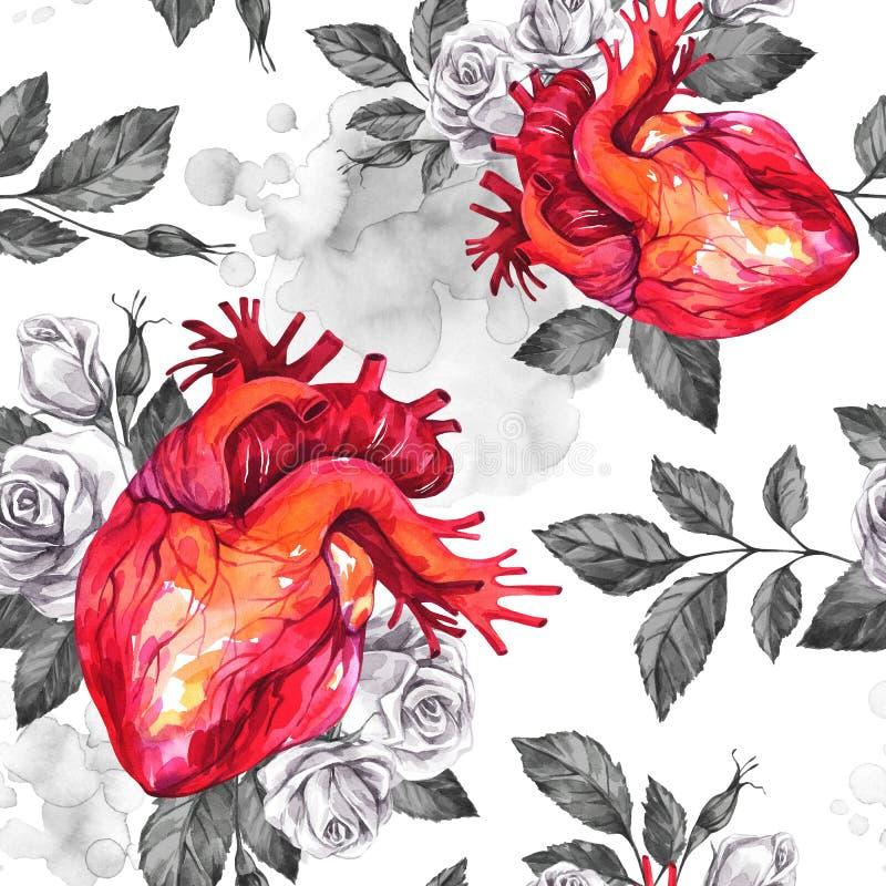 Akwarela bezszwowy wzór, anatomic serca z nakreśleniami róże i liście w rocznika średniowiecznym stylu, czerwona róża ilustracja wektor