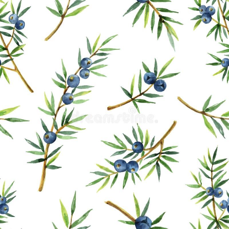 Akwarela bezszwowy wzór odizolowywający roślina jałowiec na białym tle royalty ilustracja