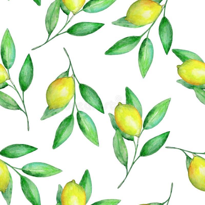 Akwarela bezszwowy wzór rozgałęzia się z cytrynami ilustracja wektor