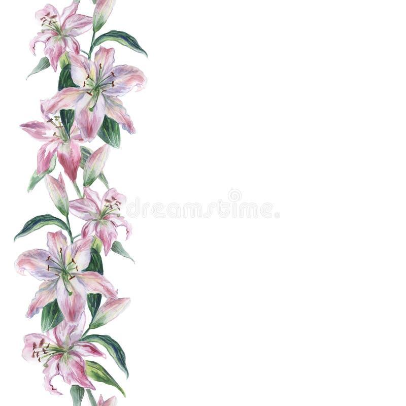 Akwarela bezszwowy wzór z bielu i menchii akwareli lilys na białym tle royalty ilustracja