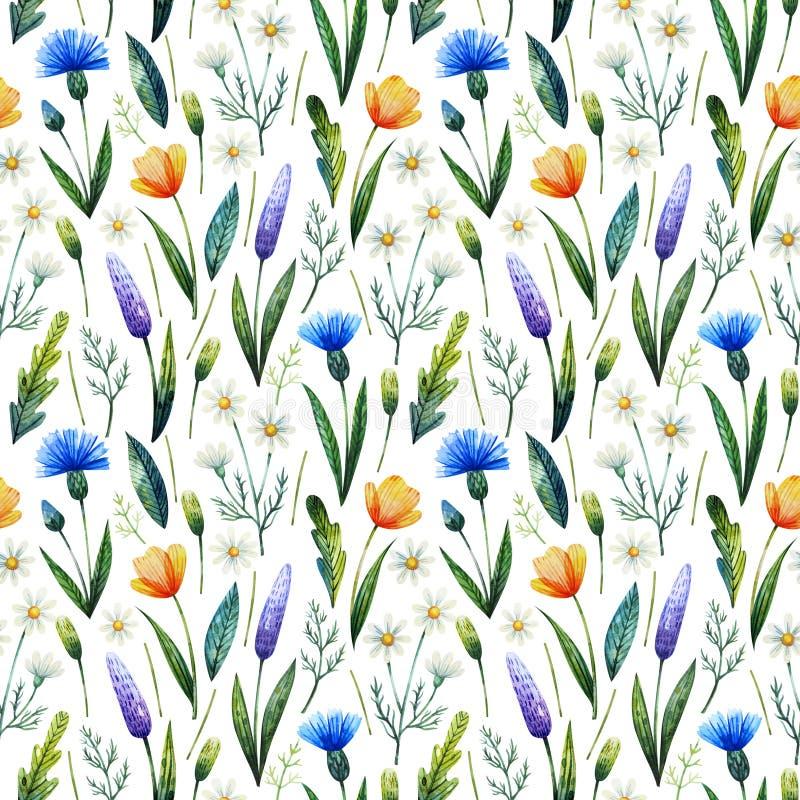 Akwarela bezszwowy wzór z cornflowers, chamomile szczegółowy rysunek kwiecisty pochodzenie wektora Ręki rysujący wildflowers obraz royalty free