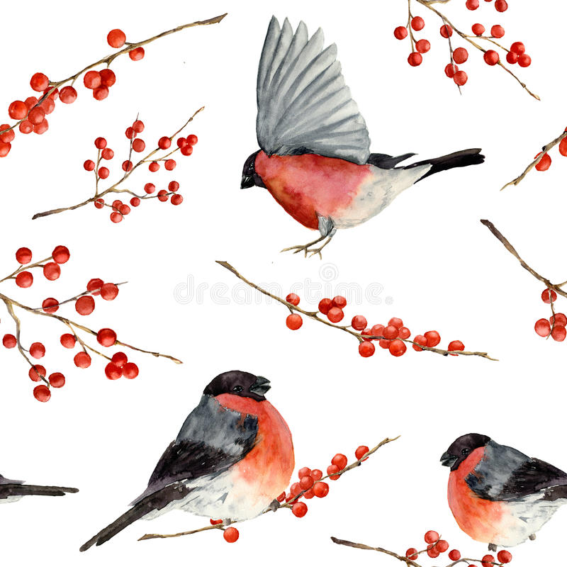 Akwarela bezszwowy wzór z gila i czerwieni jagodami Ręka malował ornament z ptakami i zim jagodami na białym backgroun royalty ilustracja