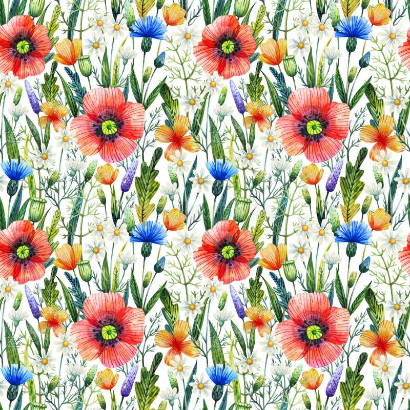 Akwarela bezszwowy wzór z maczkami szczegółowy rysunek kwiecisty pochodzenie wektora Ręka rysujący lato kwiaty obraz stock