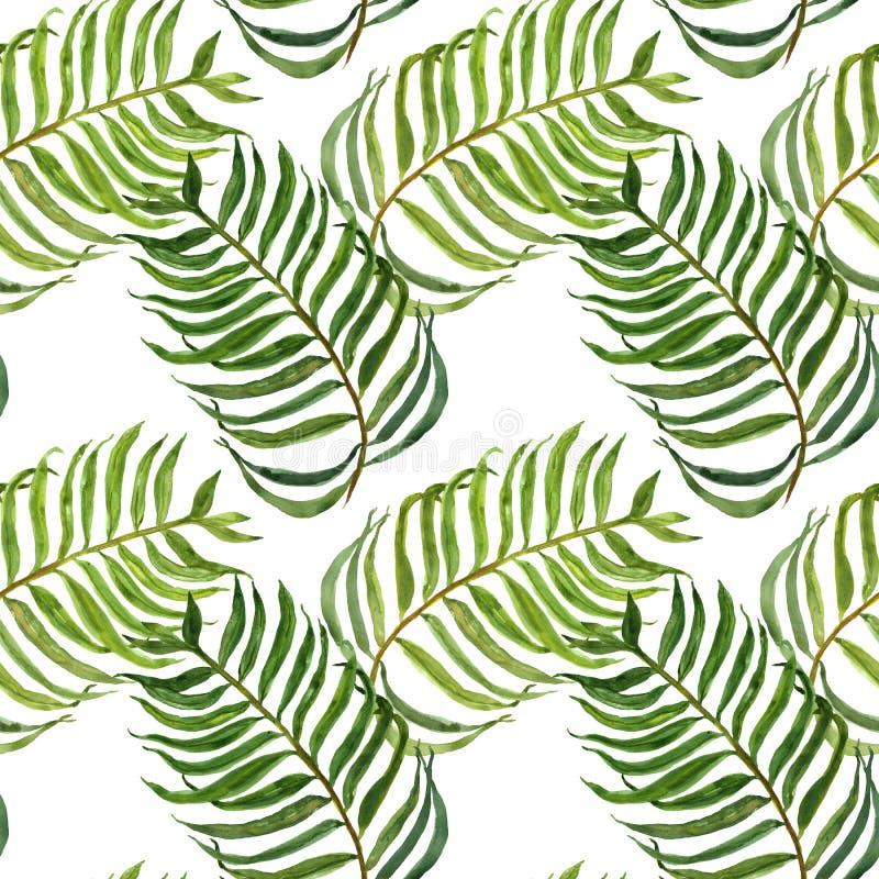 Akwarela bezszwowy wz?r z palmowymi li??mi Egzotyczny tropikalny zielony ulistnienie na białym tle Nowożytny botaniczny druk ilustracja wektor