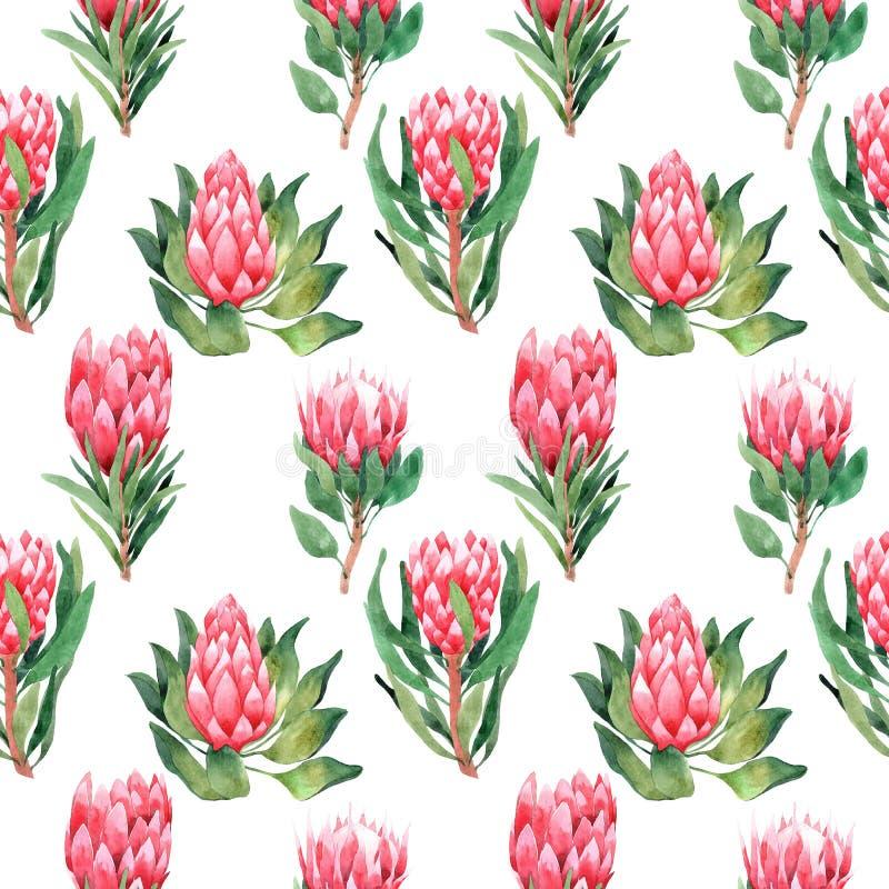 Akwarela bezszwowy wz?r z tropikalnymi li??mi i kwiatami greenfield sukulent projekta elementu kwiecisty ilustraci wektor Doskona royalty ilustracja