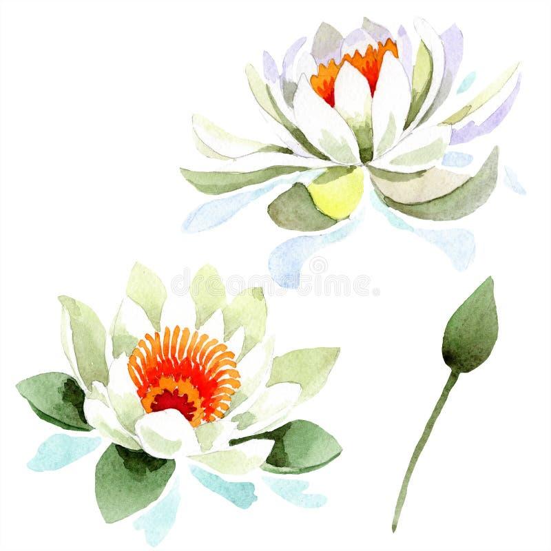 Akwarela biały lotosowy kwiat Kwiecisty botaniczny kwiat Odosobniony ilustracyjny element royalty ilustracja