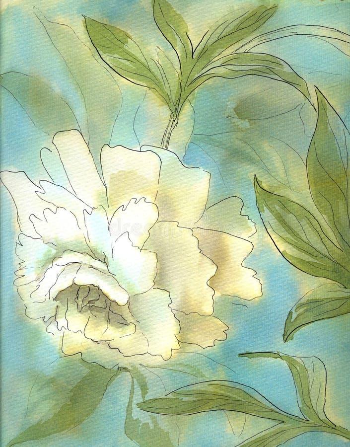 Akwarela bielu peon zdjęcie stock