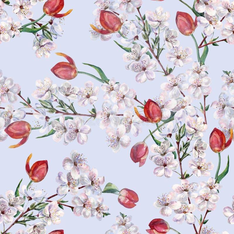Akwarela bukiet kwitnie tulipanu z wiśnią Bezszwowy wzór na błękitnym tle royalty ilustracja