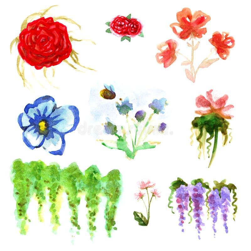 Akwarela cieni czerwieni róży kwiatów karcianych rośliien krzaków wpisowy ogród opuszcza obrazki ustawia odizolowywającymi ilustracji