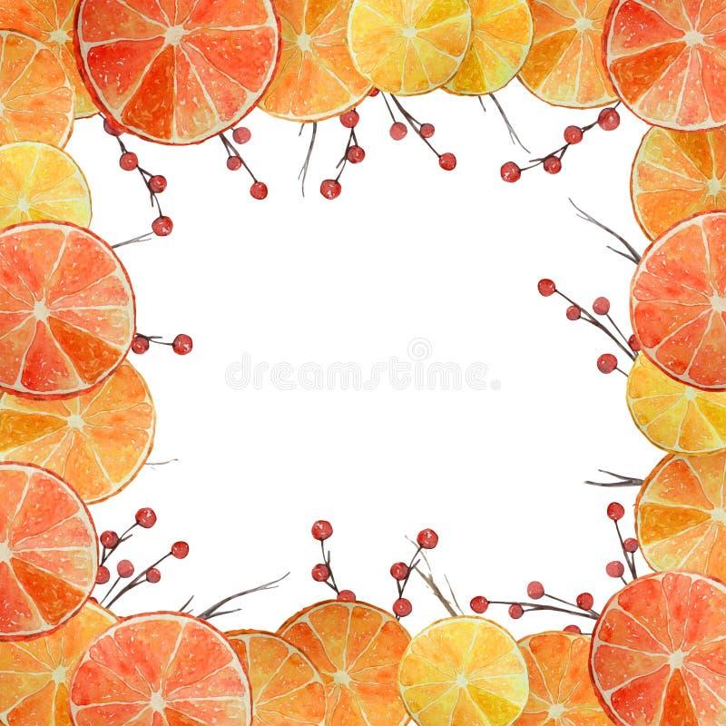 Akwarela cytrusa Bożenarodzeniowa rama ilustracji