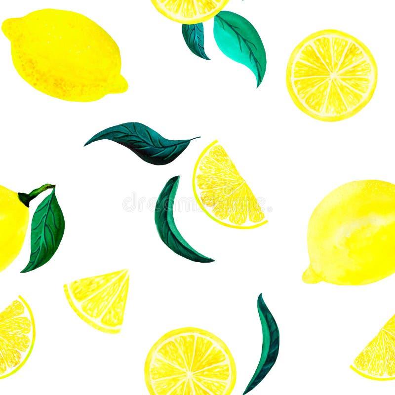 Akwarela cytrusa cytryny wzór z liśćmi Cytrusa bezszwowy wzór, botaniczna naturalna ilustracja na białym tle R?ka ilustracja wektor