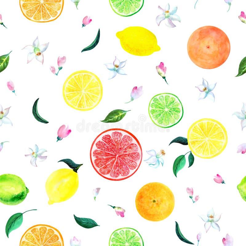 Akwarela cytrusa wzoru kwitnąca pomarańczowa gałązka z kwiatami, kwiecisty bezszwowy wzór, botaniczna naturalna ilustracja na bie ilustracji