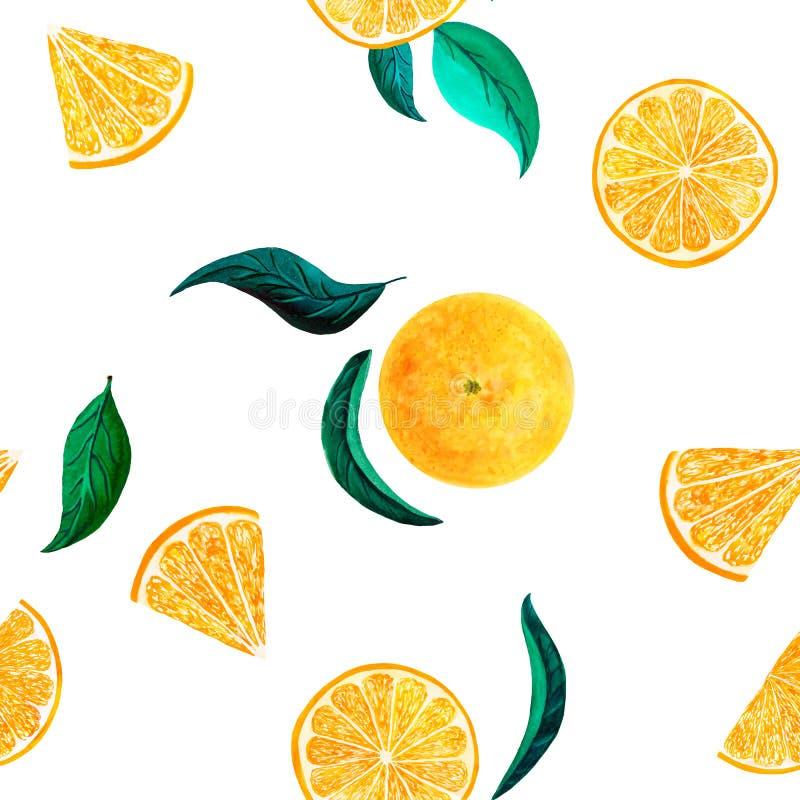 Akwarela cytrusa wzoru pomarańcze, bezszwowy wzór z gałąź, botaniczna naturalna ilustracja na białym tle R?ka ilustracja wektor