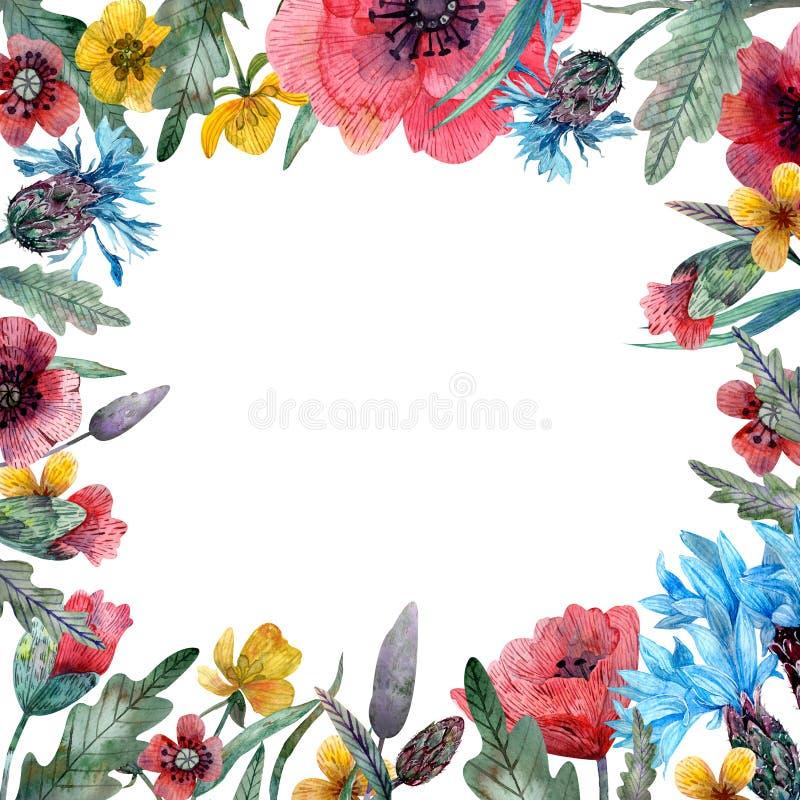 Akwarela dzikich kwiatów rama royalty ilustracja