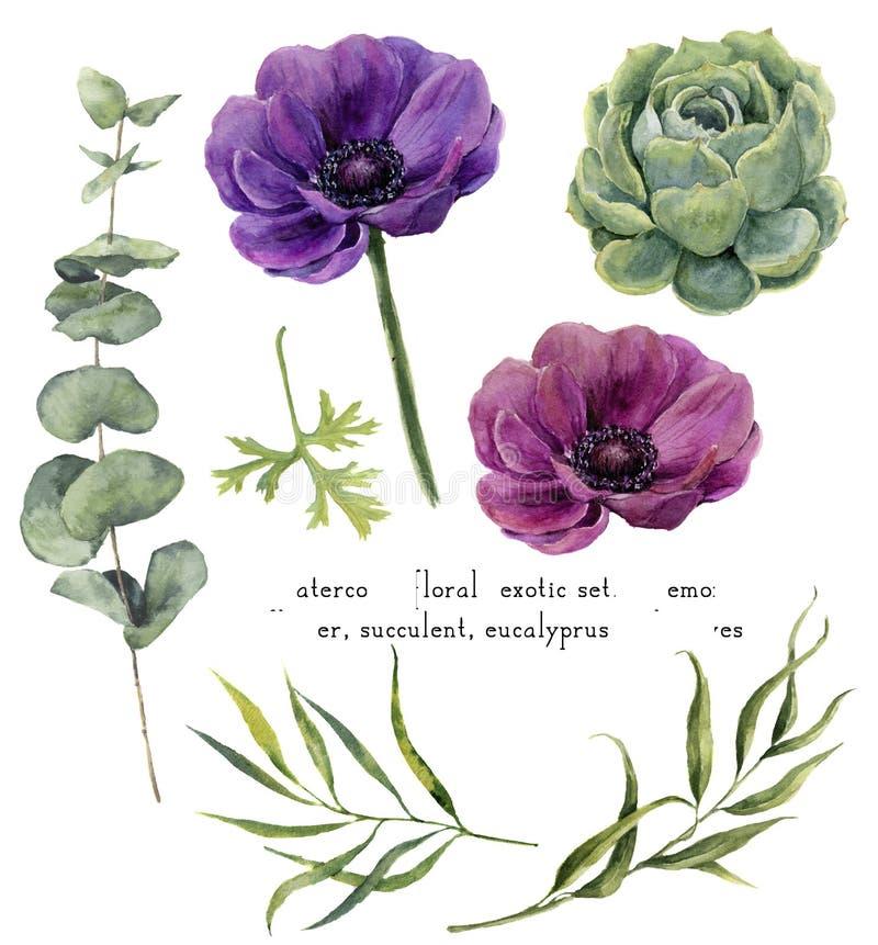 Akwarela egzotyczni kwieciści elementy ustawiający Rocznik opuszcza, eukaliptus, sukulent i anemon kwitnie odosobnionego na bielu ilustracji