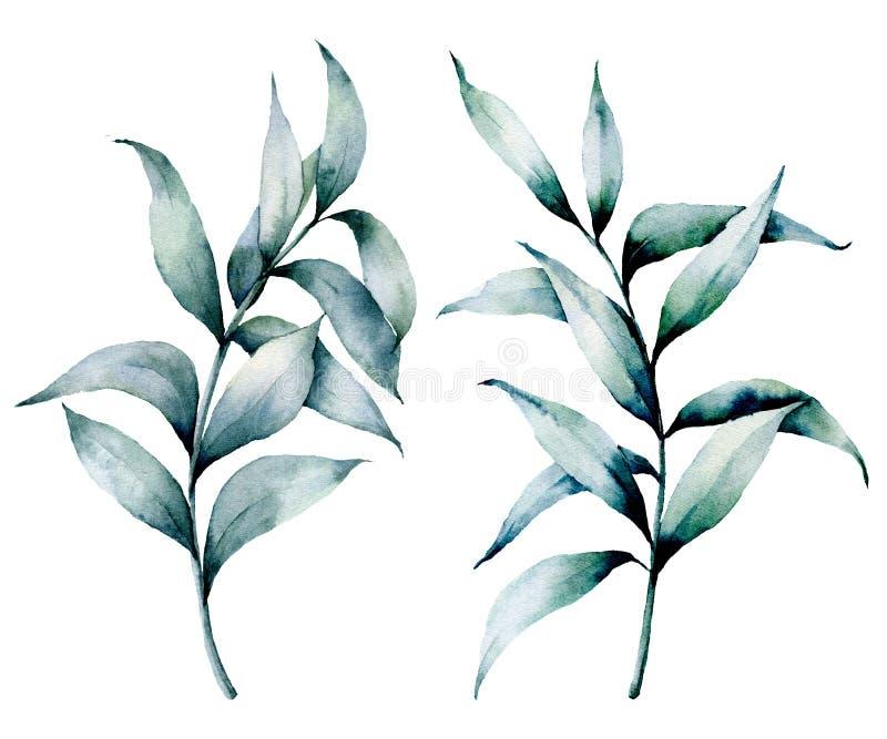 Akwarela eukaliptusa srebny set Ręka malująca siająca eukaliptus gałąź z liśćmi odizolowywającymi na białym tle kwiecisty royalty ilustracja