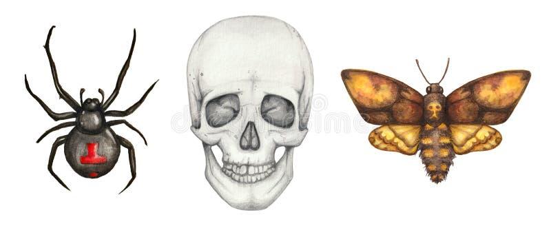 Akwarela gothic set z pająkiem, czaszką i ćma, royalty ilustracja