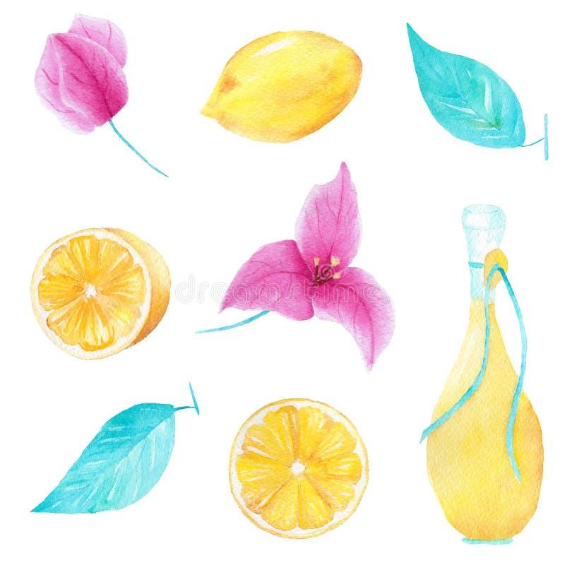 Akwarela handmade set cytryna, oliwa z oliwek, liść i bouganvillea, kwitniemy może używać dla drukować i dekoraci ilustracji