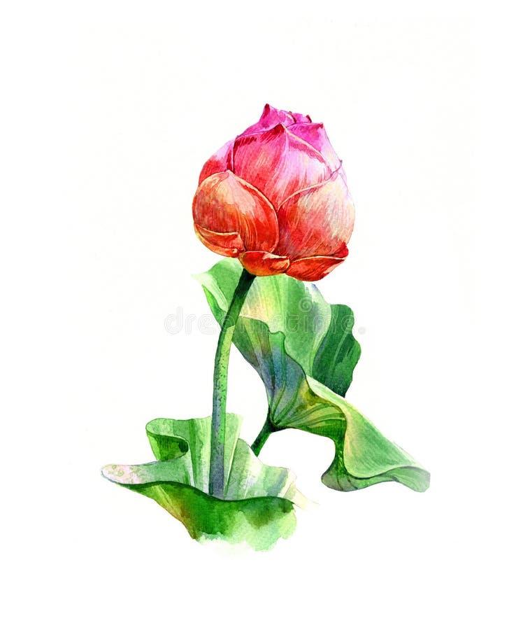 Akwarela ilustracyjny obraz liście i lotos royalty ilustracja