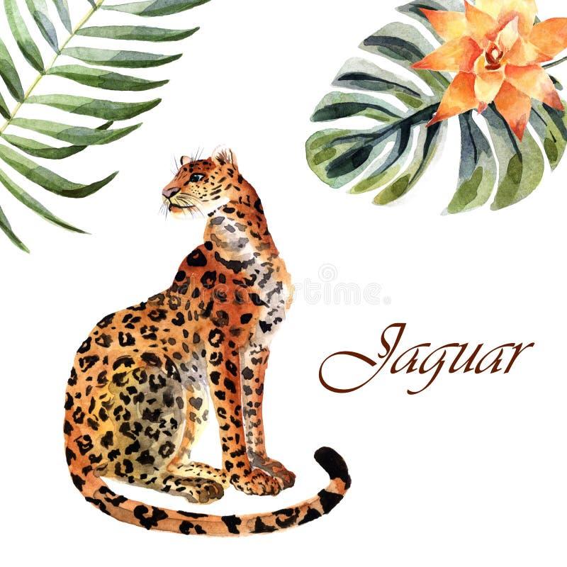 Akwarela jaguar odizolowywający na białym tle ilustracja wektor