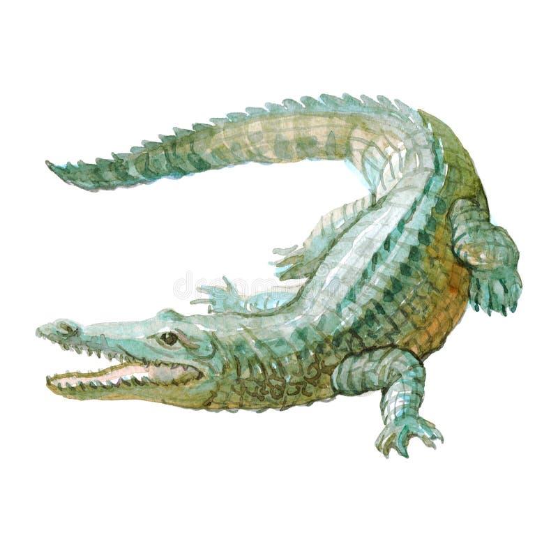 Akwarela krokodyl, aligatora tropikalny zwierzę odizolowywający ilustracja wektor