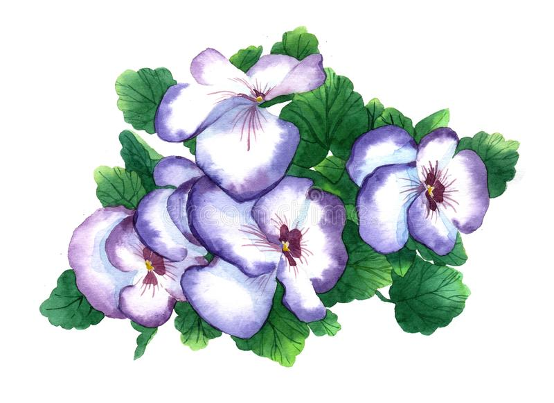 Akwarela kwiatu fiołkowy bukiet fotografia stock