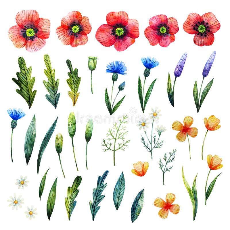 Akwarela kwieciści elementy Maczki, cornflowers, chamomile i liście, Ręki rysujący wildflowers fotografia stock
