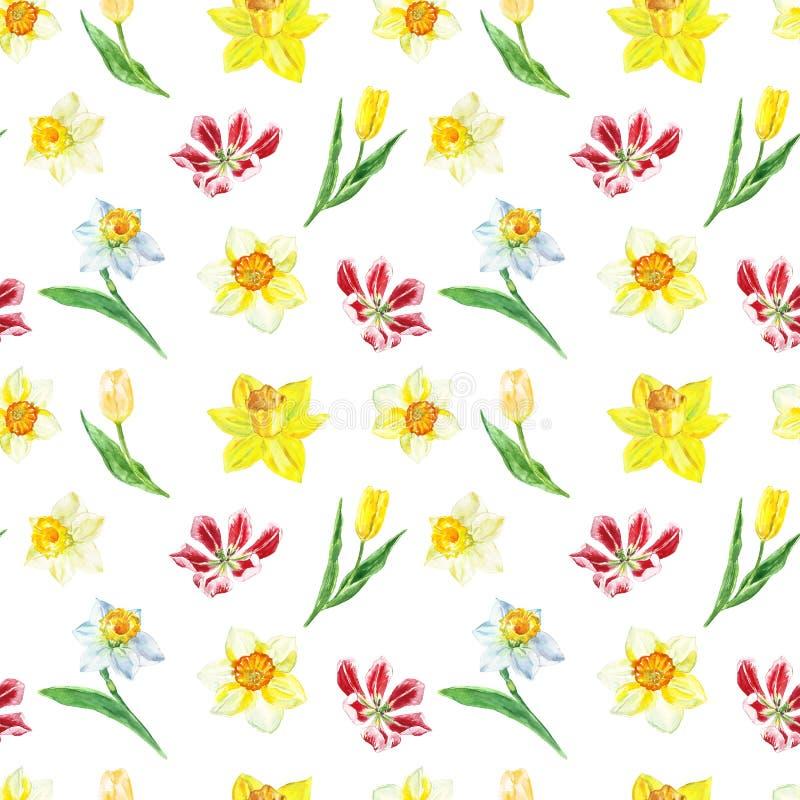 Akwarela kwiecisty bezszwowy wzór z żółtym narcyzem i tulipany na białym tle Jaskrawy botaniczny druk ilustracja wektor