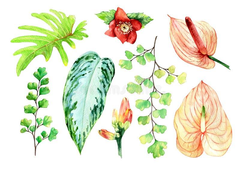 Akwarela kwitnie ilustrację skład odizolowywał tropikalny royalty ilustracja
