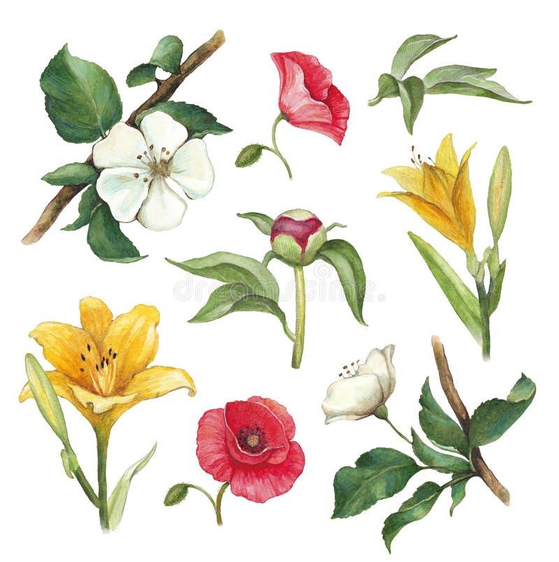 Akwarela kwitnie kolekcję ilustracja wektor