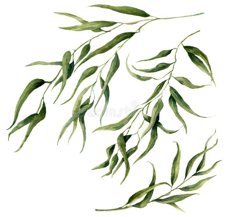 Akwarela liści gałąź eukaliptusowy set Ręka malujący kwieciści elementy ilustracja wektor