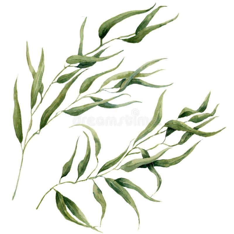 Akwarela liści gałąź set Ręka malujący eukaliptusowi elementy tła cogwheel ilustraci odosobniony biel Dla projekta, tkanina i royalty ilustracja