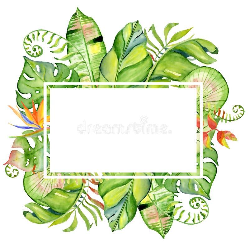Akwarela liści tropikalna rama ilustracja wektor