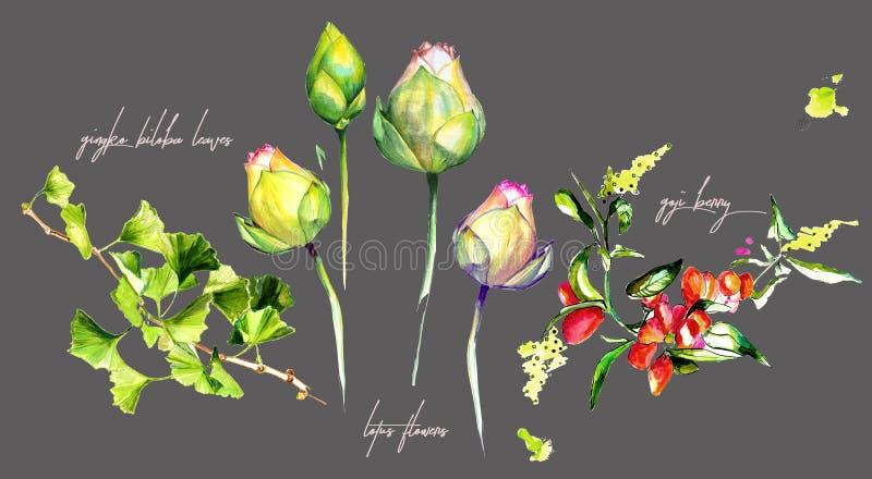 Akwarela Lotosowi kwiaty, jagody i Ginkgo liście, zdjęcia stock