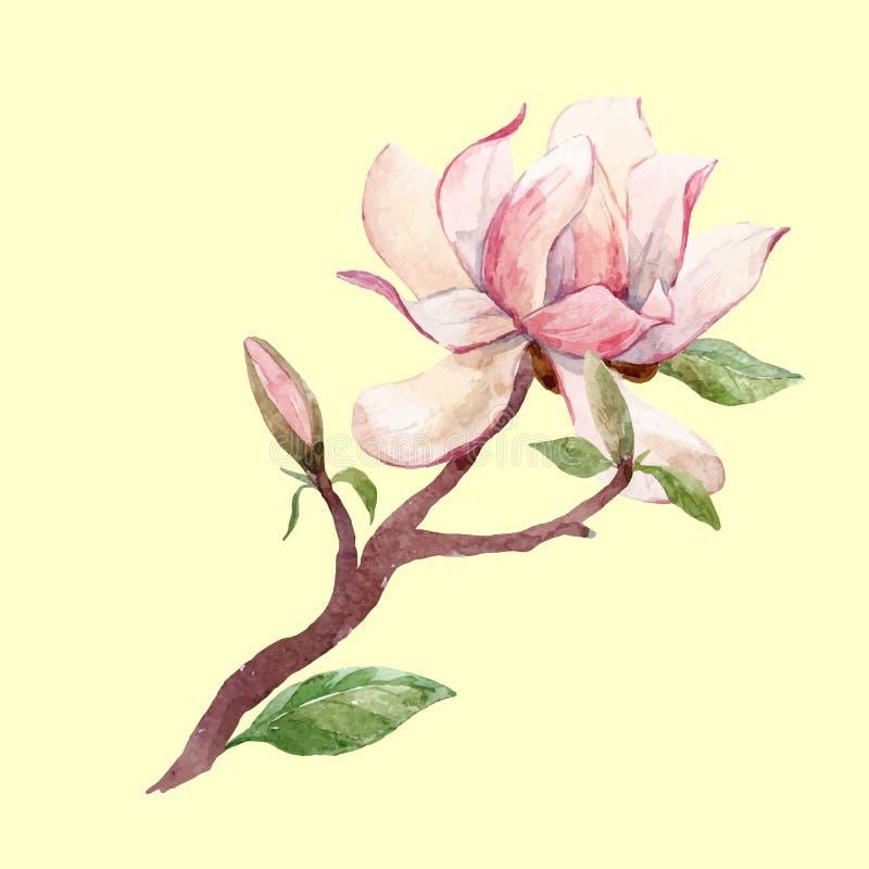 Akwarela magnoliowy kwiecisty wektorowy skład royalty ilustracja
