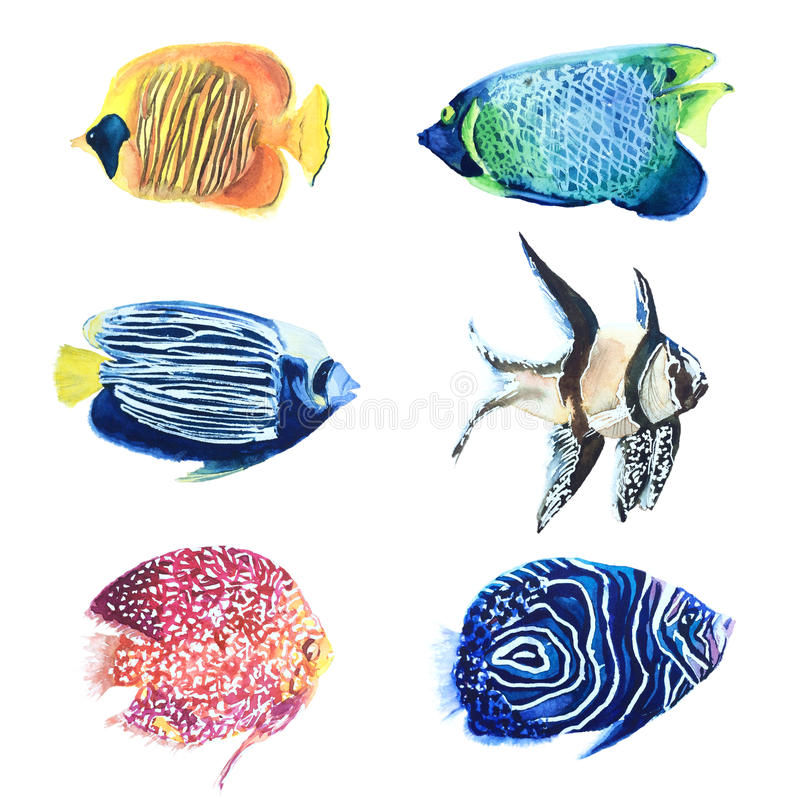 Akwarela malujący tropikalni barwioni rybi gatunki ilustracja wektor