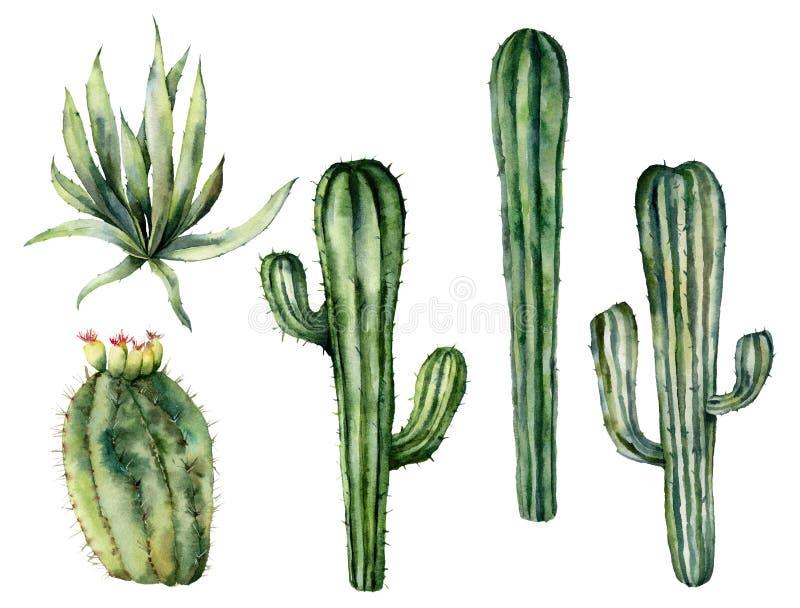 Akwarela meksykańscy kaktusy ustawiający Ręka malował kwiecistą kolekcję z pustynnymi kaktusami, agava Botaniczna ilustracja odiz ilustracja wektor