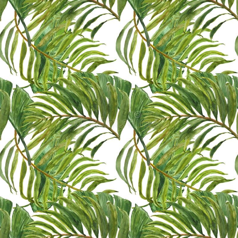 Akwarela modny tropikalny druk Bezszwowy wzór z egzot zieleni liśćmi Ręka malujący palmowy liść na białym tle botaniczny royalty ilustracja