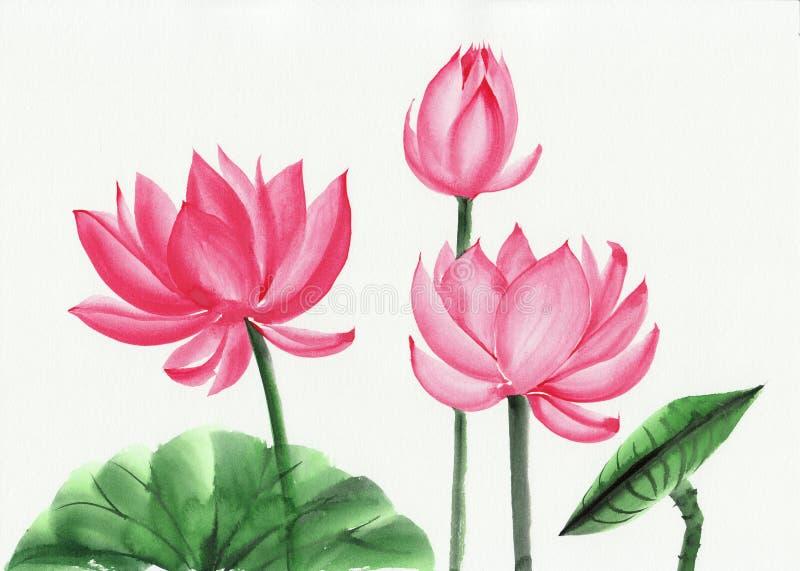 Akwarela obraz różowy lotosowy kwiat royalty ilustracja